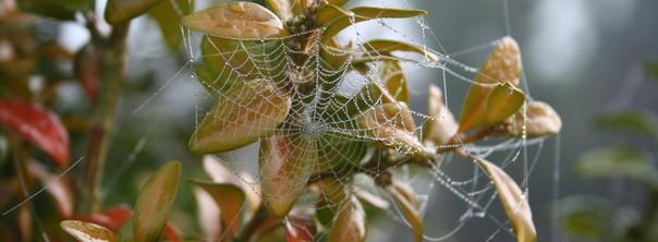 Nature d'automne : insectes, tous aux abris ! – Mercredi 2 novembre