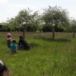animation prairie Gisacum